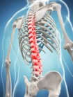 Pain localisation in thoracic section — Stock Photo