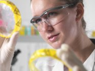 Female scientist examining cultures in petri dish. — Stock Photo