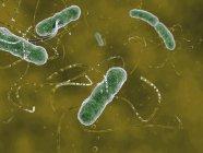 Escherichia coli bacterias patógenas - foto de stock