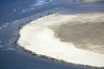 Aerial view of seals resting on sandbank of Scroby Sands, England. — Stock Photo