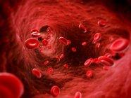 Glóbulos rojos y vasos sanguíneos - foto de stock