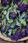 Brócolis brotos roxo na cesta. — Fotografia de Stock