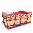 Візуальний render Анатомія людської шкіри — стокове фото