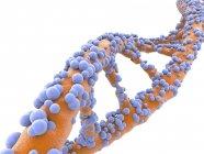 Struttura della molecola del DNA — Foto stock