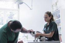 Veterinários examinando um gato — Fotografia de Stock