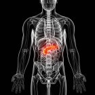 Визуального отображения мужской анатомии — стоковое фото