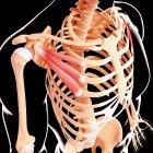 Musculatura de la cintura del hombro - foto de stock