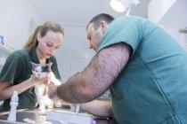 Chat examen vétérinaire — Photo de stock