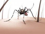 Mosquito femenino en la piel - foto de stock