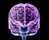 Cerebro humano sano - foto de stock