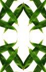 Зеленые кукурузные листья — стоковое фото