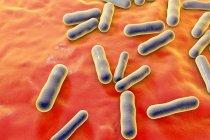 Непатогенные бактерии Propionibacterium — стоковое фото