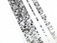 Close-up of DNA autoradiogram on white background. — Stock Photo