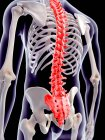 Spinal pain localisation — Stock Photo