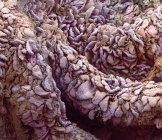 Vellosidades del revestimiento del yeyuno - foto de stock