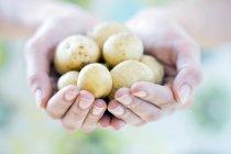 Weibliche hohlen Hand mit frischen neuen Kartoffeln. — Stockfoto