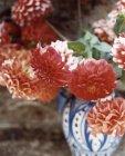 Gros plan de fleurs de Dahlia dans un vase. — Photo de stock