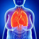 Sistema respiratorio del adulto - foto de stock
