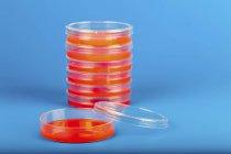 Platos Petri apilados sobre fondo azul . - foto de stock