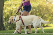 Cropped view of woman with visual impairment walking with service dog. — Stock Photo
