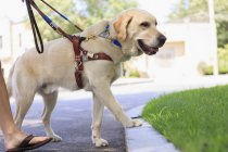 Mulher deficiente visual com seu cachorro — Fotografia de Stock