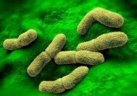 Yersinia pestis bacteria, ilustración - foto de stock