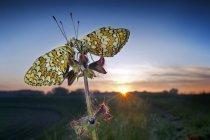 Mariposas sentadas en planta - foto de stock