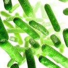 Colonia bacteriana en cultivo - foto de stock