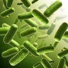 Bacterial colony in culture — Stock Photo