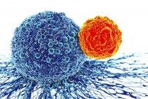 Células cancerosas atacadas por células T - foto de stock