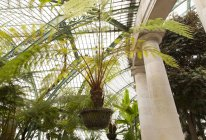 Green house with palms — Stock Photo