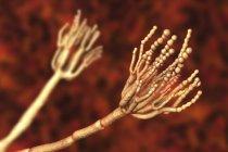 Ilustración de la computadora de un hongo de Penicillium sp. - foto de stock