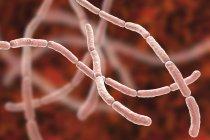 Bacterias de la fiebre por mordedura de rata, ilustración informática - foto de stock