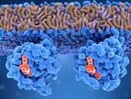 Attivazione delle proteine Ras, illustrazione digitale . — Foto stock