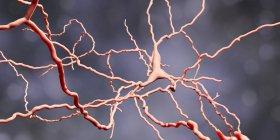 Células cerebrales de neuronas dopaminérgicas, ilustración digital . - foto de stock