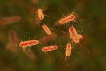 Ilustración digital de la bacteria Escherichia coli . - foto de stock