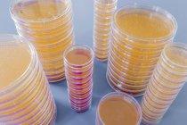 Pile di Petri con coltura agar su sfondo semplice — Foto stock