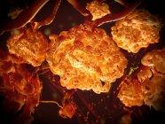 Corpuscoli renali nel rene, illustrazione digitale . — Foto stock