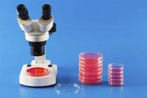 Microscopio e mucchi su piastre Petri in laboratorio su priorità bassa blu. — Foto stock