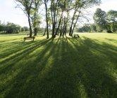 Rayons de soleil à travers les arbres dans le parc vert . — Photo de stock
