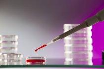 Micropipette pipettant échantillon de sang dans la boîte de Petri . — Photo de stock
