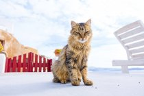 Tortoiseshell cat sitting at sun terrace. — Foto stock