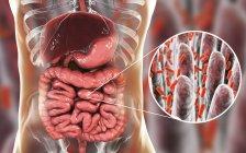Obra de arte del sistema digestivo humano y primer plano de bacterias en el intestino delgado . - foto de stock