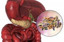Apparato digestivo umano con pancreas evidenziato e modello molecolare di insulina . — Foto stock