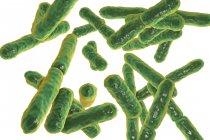 Obra digital de bacterias bifidobacterias anaerobias grampositivas . - foto de stock