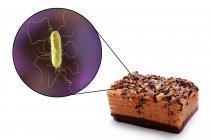 Ilustración conceptual del trozo de pastel y aumento de la bacteria de la infección transmitida por los alimentos sobre fondo blanco . - foto de stock