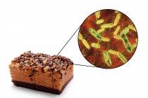 Trozo de pastel e imagen microscópica de la bacteria Salmonella, ilustración conceptual . - foto de stock