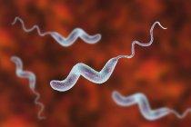 Campylobacter jejuni bacteria with flagella, digital artwork. — Stock Photo