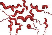 Campylobacter jejuni бактерии с жгутиком, цифровые произведения искусства . — стоковое фото