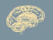Silueta del cerebro humano sobre fondo liso, ilustración digital . - foto de stock